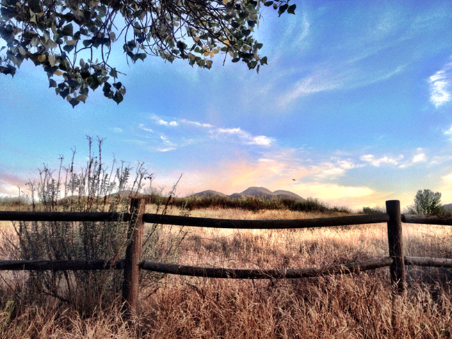 Evening grasslands at Mission Trails Regional Park (Photo by Tony Andrews)