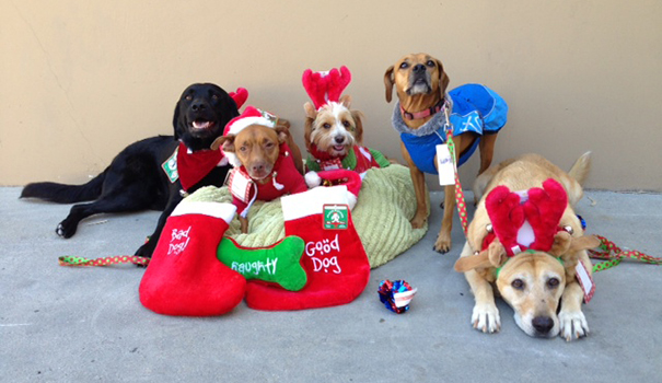 Dogs and puppies on hand for stocking stuffing with PAWS San Diego (Courtesy Kelli Schry)