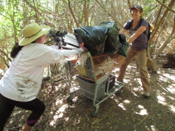 Volunteers use a shopping cart to move heavy debris from the river to the collection site. (Courtesy of I Love a Clean San Diego)