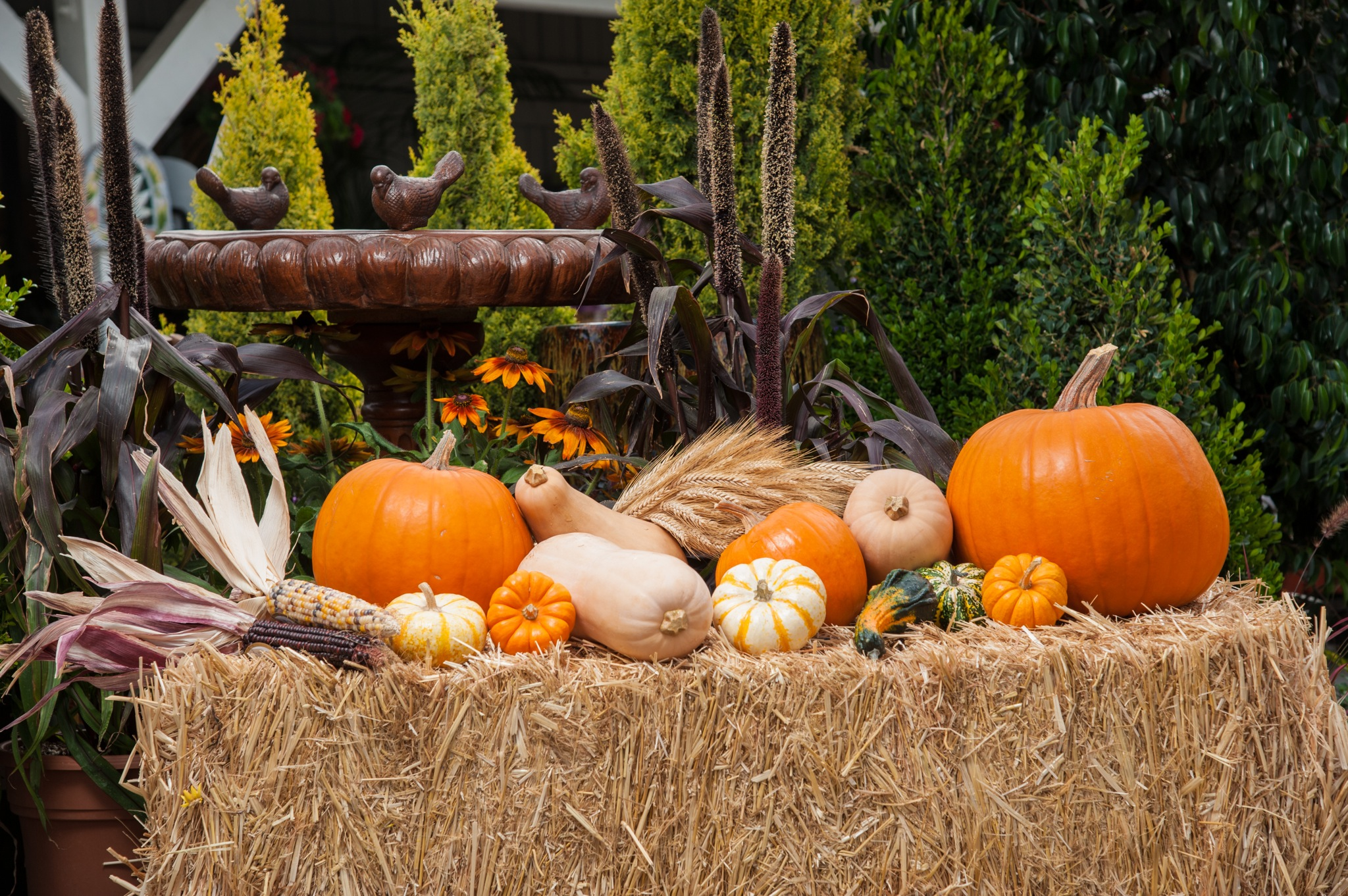 Using pumpkins to create a unique fall décor - Mission Times Courier