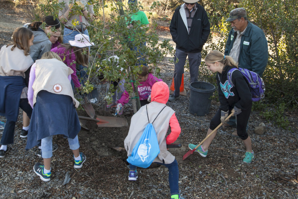 Girl Scouts put finishing touches on planting the Coastal Live Oak their troop sponsored on Arbor Day at Mission Trails. (Photo by Gerry Tietje)