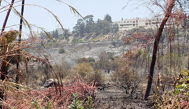 Firefighters save Del Cerro from Adobe Fire